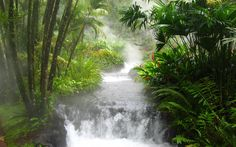 asian jungle | Asian jungle wallpapers and images - download wallpapers, pictures ...