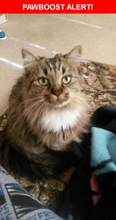 Please spread the word! Bobbie Girl was last seen in Gastonia, NC 28056.  Description: Spayed, very timid with strangers, former feral  Nearest Address: 2829 Beaty Road, Gastonia, NC, United States