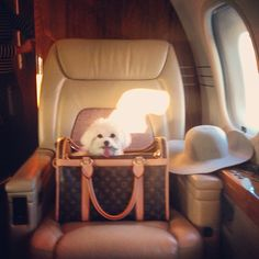 Because pets need to travel in style too Airport Style, Airport Fashion, Small Minds, Luxe Life, Sartorialist, Louis Vuitton Handbags, Luxury Travel, Travel Style, Luxury Lifestyle