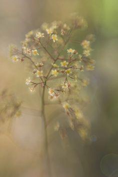 A little smoke by Jacky Parker Floral Art, via Flickr  @Ida Ristner Ristner Christine Kvisgaard