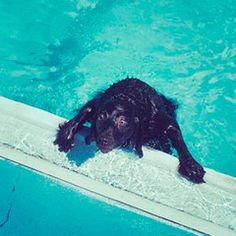 Don't let your dog be a drowning statistic. Learn how dog stairs for the pool can save your dog!
