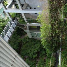 Green Garden and corridor