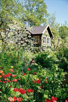 Green swedish house in the garden.