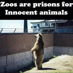 TODAY IS INDEPENDENCE DAY!  WE CELEBRATE FREEDOM, WHAT ABOUT OUR ANIMALS?  THEY HAVE NO CHOICE?    WHAT KIND OF EXAMPLE ARE WE SETTING FOR OUR CHILDREN? Zoos Are Prisons