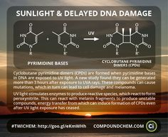 A study this week found that DNA damage as a result of UV rays can occur hours after sun exposure.Featured in 'This Week in Chemistry'.