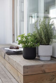 Outdoors, herbs. Photo © Elisabeth Heier