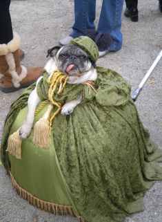 We are not privy to the backstory, but this pug is wearing the Scarlett O'Hara drapery dress with a certain elan.
