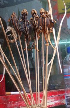 Chinese street food Lizard on a stick.