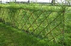 Privacy Fence Landscaping, Shrubs For Landscaping, Fence Plants, Low Maintenance Landscaping, Landscaping Ideas, Yard Privacy, Backyard Fences, Garden Hedges, Garden Fencing