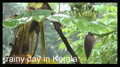 Rainy day in Kerala # travel Kerala # Kerala tourism # monsoon Kerala # best Kerala tours # budget Kerala travel
