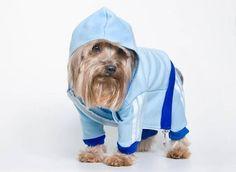 Roupa para cachorro - Conjunto Audidas
