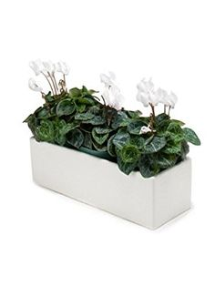 13 Quot X 5 Quot White Ceramic Large Slim Long Planter Patio