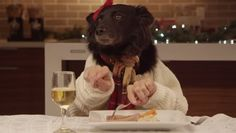 Dogs Eat with Human Hands in FreshPet's Hilarious Holiday Commercial - Funny Animal Videos - Woman's Day