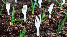 23 Astuces Ingénieuses Pour Vous Simplifier le Jardinage.