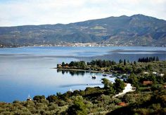 Pefki Evia Greek Flowers, Forest Mountain, Tree Forest, Flowering Trees, Sandy Beaches, Greek Islands, Beautiful Islands, Homeland, Forests