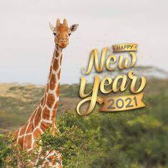 Abelana Game Reserve (@abelanagamereserve) • Instagram photos and videos Game Reserve, Giraffe, Photo And Video, Videos, Happy, Photos, Animals, Instagram, Felt Giraffe