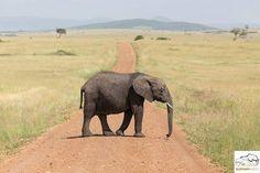 #elephants #elephantmission # elephantsofinstagram #elephantsareawesome #elephantsanctuary #savetheelephants