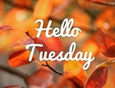 Top of an Afternoon on this Beautiful Fall Tuesday to ALL My Sweet Sister's Have a Terrific Tuesday Tuesday Quotes Good Morning, Happy Day Quotes, Funny Good Morning Images, Happy Tuesday Quotes, Good Morning Image Quotes, Good Morning Happy, Its Friday Quotes, Morning Quotes, Tuesday Humor
