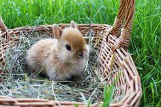 Bildergebnis für süße hasen bilder Hasen Animals, Cute