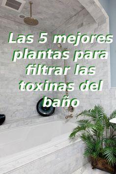 Hace unos años, hablamos de plantas para purificar el aire de la casa, allí les contamos cuales eran las mejores plantas de interior según una investigació
