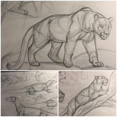 New Art Sketches Animal Sketches, Art Drawings Sketches, Animal Drawings, Cool Drawings, Drawing Animals, Lion Sketch, Cat Sketch, Cat Anatomy, Cat Drawing