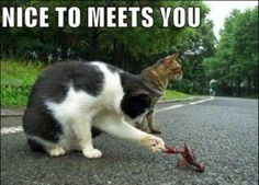 That crawfish won't be alive for long...once it pinches the cat...or maybe the other way around? :)