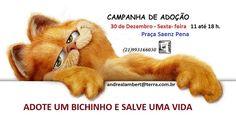 BONDE DA BARDOT: RJ: Adote um animal resgatado, nesta sexta-feira, na Tijuca (30/12)