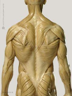 Anatomy Back, Muscle Anatomy, Anatomy Study, Body Anatomy, Anatomy Sketches, Anatomy Drawing, Body Reference, Anatomy Reference, Zbrush