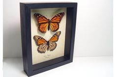 Father's Day & Graduation Gift Real Framed by REALBUTTERFLYGIFTS