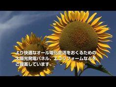 http://ecobanktel.tumblr.com/