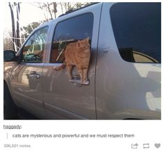"""I don't know why I laughed so hard, but the caption just slays me.  """"Cats are mysterious and powerful, and we must respect them."""""""