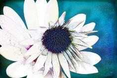 'Blossom Art' von Dirk h. Wendt bei artflakes.com als Poster oder Kunstdruck $16.99