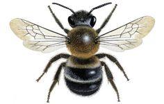 New report reveals extent of bee decline http://www.foe.co.uk/news/regional_bees_report_40066.html