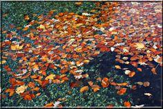 Schwimmende Blätter Painting, Art, Swimming, Water, Art Background, Painting Art, Kunst, Paintings, Performing Arts