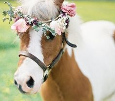 PetsLady's Pick: Cute I Love Horses Day Miniature Horse Of The Day ... see more at PetsLady.com ... The FUN site for Animal Lovers