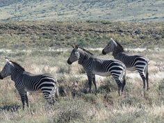 Karoo National Park, Western Cape, South Africa, February 2011 | Flickr - Photo Sharing!