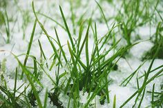 The key to lawn care in winter is simple maintenance. Sweep away fallen leaves and remove anything sitting on the lawn, such as furniture, toys, or branches