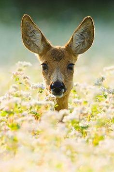 Deer in Flowers - Android Wallpaper