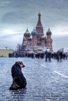 Wonderful Shot of Mosow by Denis Kluyev.  Yea and the dog is cute too!!