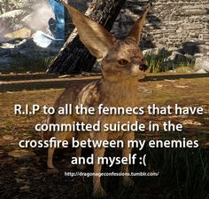 Confession: R.P to all the fennecs that have committed suicide in the crossfire between my enemies and myself :( << Please! I don't wanna kill you! Dragon Age Memes, Dragon Age Funny, Hole In The Sky, Vampire Masquerade, Fandom Games, Dragon Age Inquisition, Mass Effect, Elder Scrolls, Funny Games