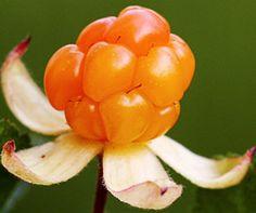 Hilla - Cloudberry