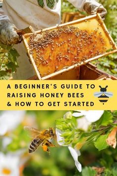 There's never been a better time to raise backyard bees. Here is your complete beginner guide on how to start a backyard beehive. From what to expect and how to plan your new hobby, this guide has it all. Honey Bee Box, Honey Bee Garden, Honey Bee Farming, Honey Bee Hives, Honey Bees, Honey Bee Flowers, Bee Food, Small Bees, Small Farm