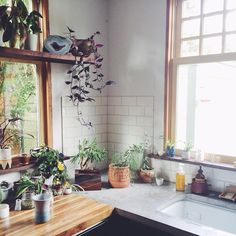 would dream to have so much space in a kitchen that an entire corner could consist of plants!