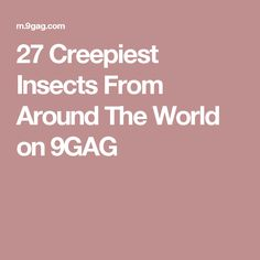 27 Creepiest Insects From Around The World on 9GAG