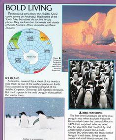 Penguin Facts | Penguin Place Penguin Facts, Antarctica, South America, Penguins, New Zealand, Coast, Africa, Ocean, Australia