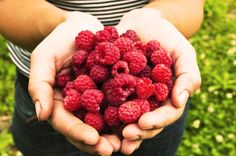 Feel Good Food: Raspberries are as nutritious as they are beautiful! These juicy fruits are a rich source of the flavonoids, quercetin and gallic acid, which are really good for the heart!
