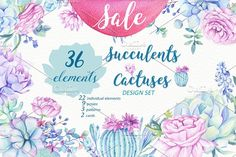 -40% OFF - Succulents & Cactuses by Sunny Illustrations on @creativemarket