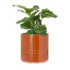 Bloempot Suus is een topper en uniek. De brique kleurige pot is van geglazuurd aardewerk en het goudkleurige lijnpatroon is een Riverdale dessin en wordt er met de hand op geschilderd. De pot is waterdicht en verkrijgbaar in verschillende maten. Leuk om te mixen. Welke plant ga jij verblijden Hangers, Om, Planter Pots, Plants, Brick, Clothes Hanger, Clothes Hangers, The Hunger, Plant