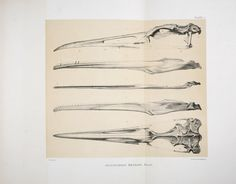 Odontornithes: a monograph on the extinct toothed birds of North America;. Washington :Govt. print. off.,1880..