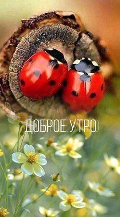 Birthday Greeting Message, Birthday Greetings, Good Morning Coffee, Happy Morning, Good Morning Photos, Ladybug, Quotations, Live, Frases